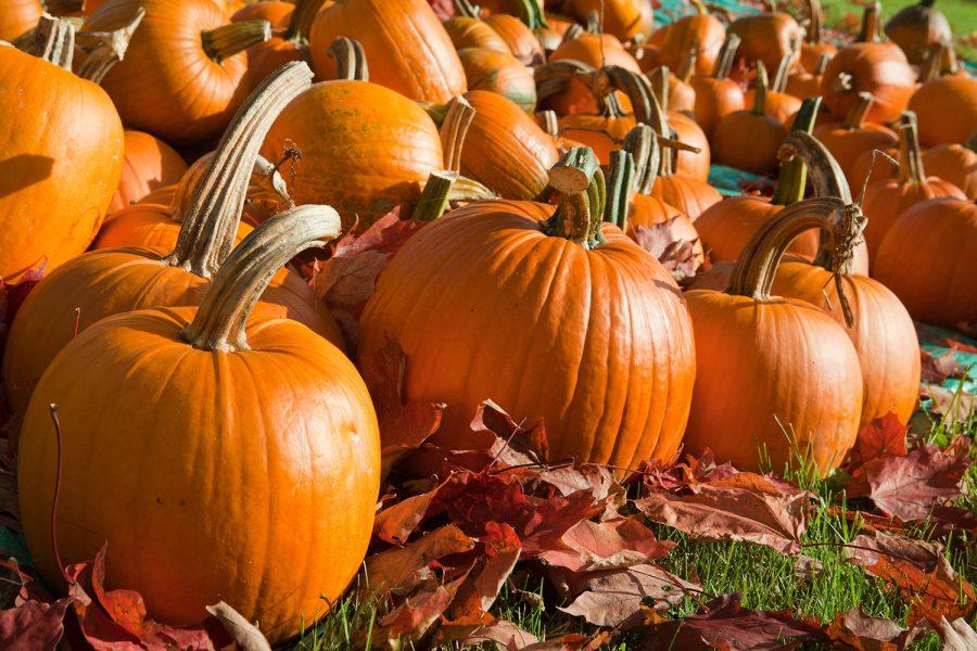 October 26th – National Pumpkin Day
