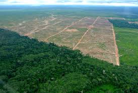 What's Happening To The Amazon Rain forest